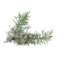 cedar virginia perfume ingredient