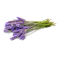 lavender raw materials scent market
