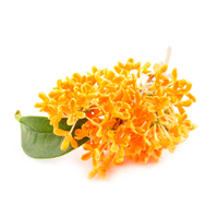 osmanthus raw materials scent market
