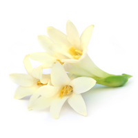 tuberose perfume ingredient